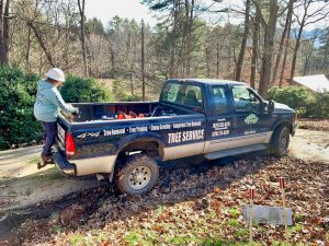 tree care in Biltmore forest nc
